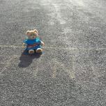 bear at finish - cropped